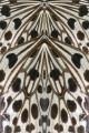 83 farfalla