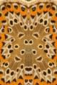 37 farfalla