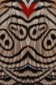 94 farfalla