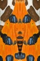 97 farfalla
