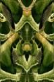 100 farfalla